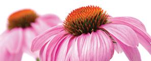 imagen-prfitech-flores